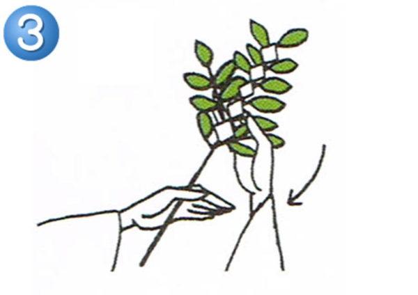 玉串奉奠の作法3